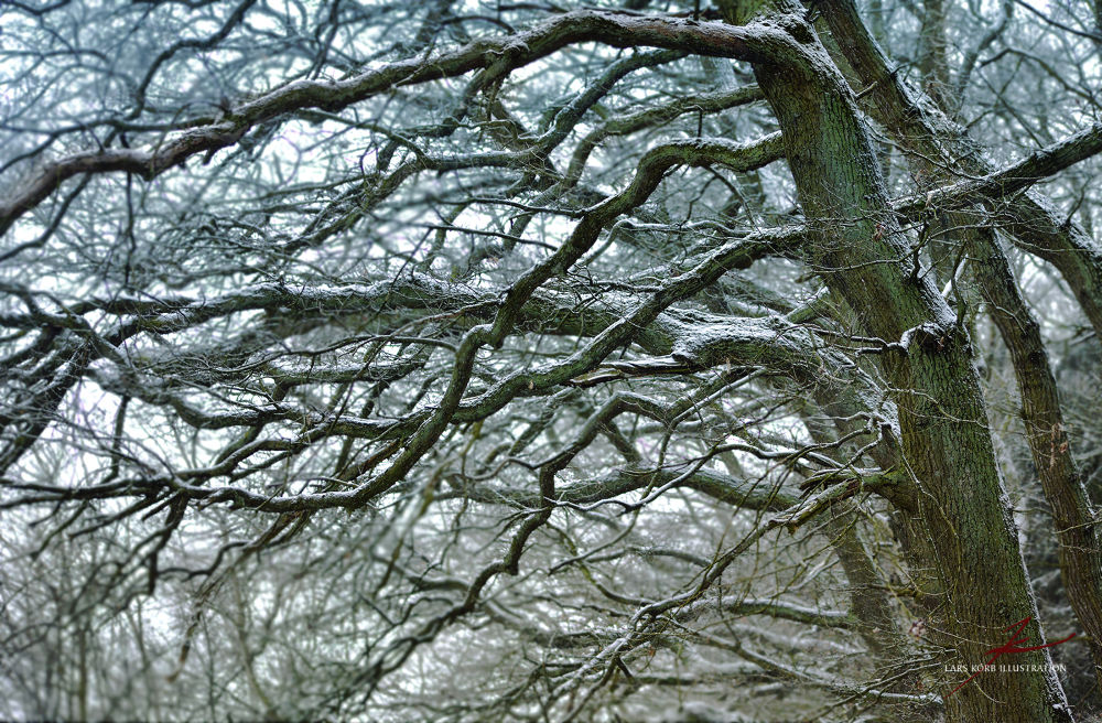 Photo in Nature #woods #forest #trees #tree #oaks #seasons #winter #snow #frost #wildlife #wilderness #nature #landscape