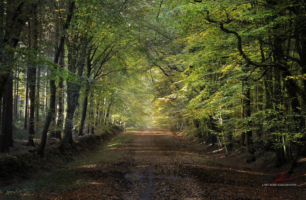Photo in Nature #landscape #ypa2013 #nature #wildlife #trees #tree #woods #forest #seasons #summer #path #trail #tunnel #european #beeches