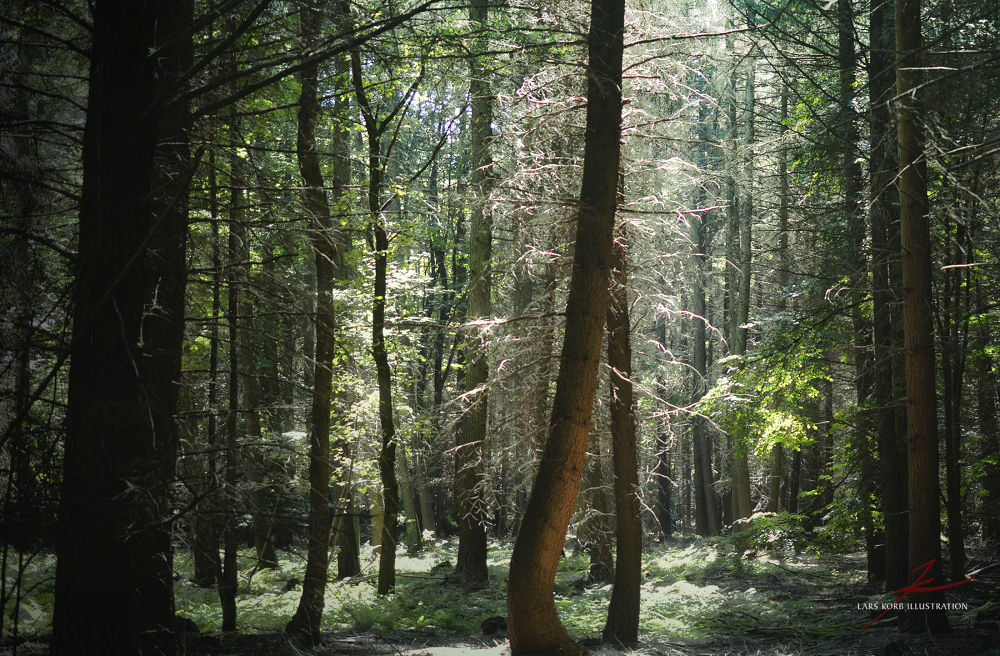 Photo in Nature #forest #woods #woodland #nature #landscapes #seasons #summer #trees #conifers #beeches #spruces #wildlife #wilderness