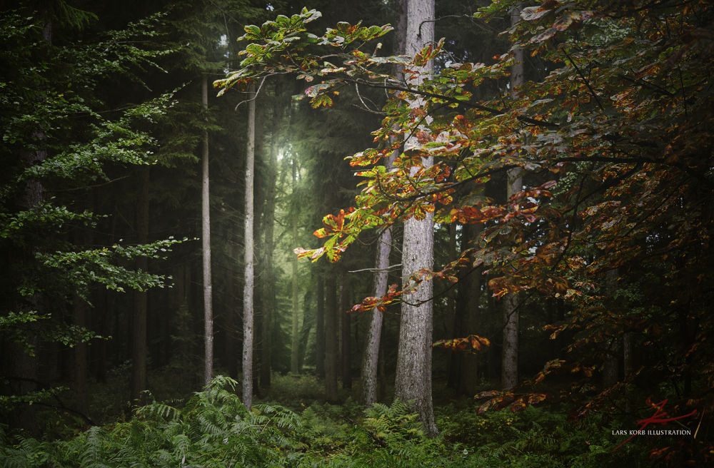 Photo in Nature #forest #woods #trees #leaves #seasons #fall #autumn #ferns #conifers #humid