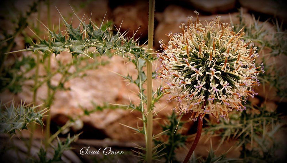 Photo in Nature #strange  nice   flower
