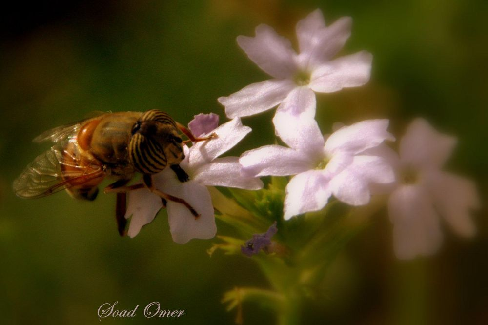 Photo in Nature #nice  flower a bee