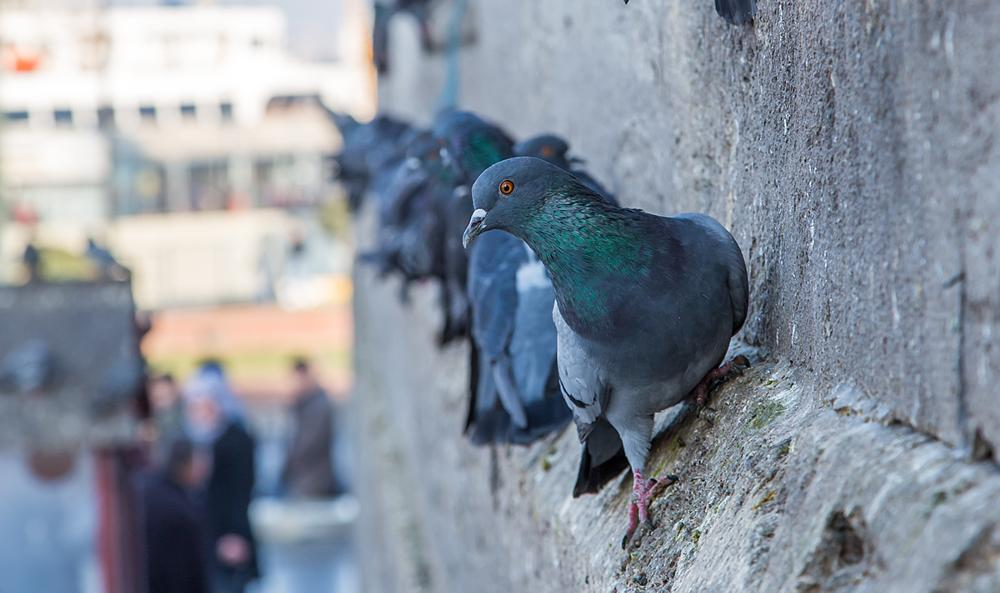 Photo in Architecture #pigeon #eminönü #güvercin