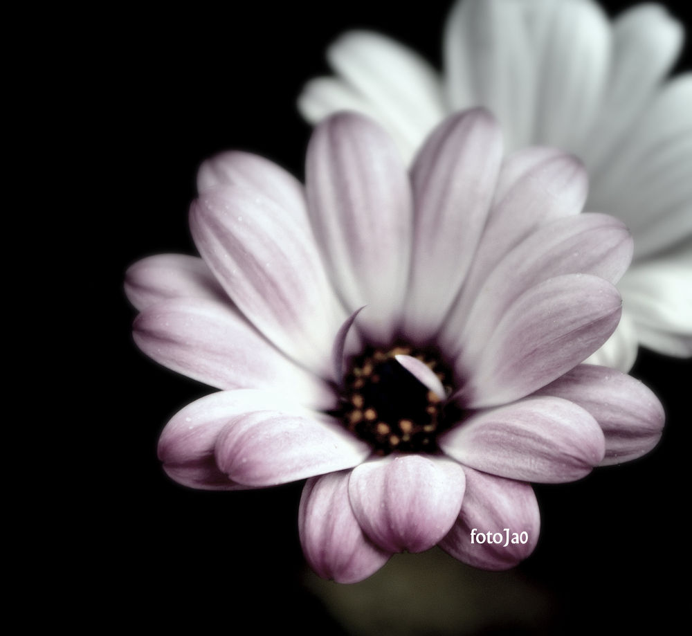 Photo in Random #flower