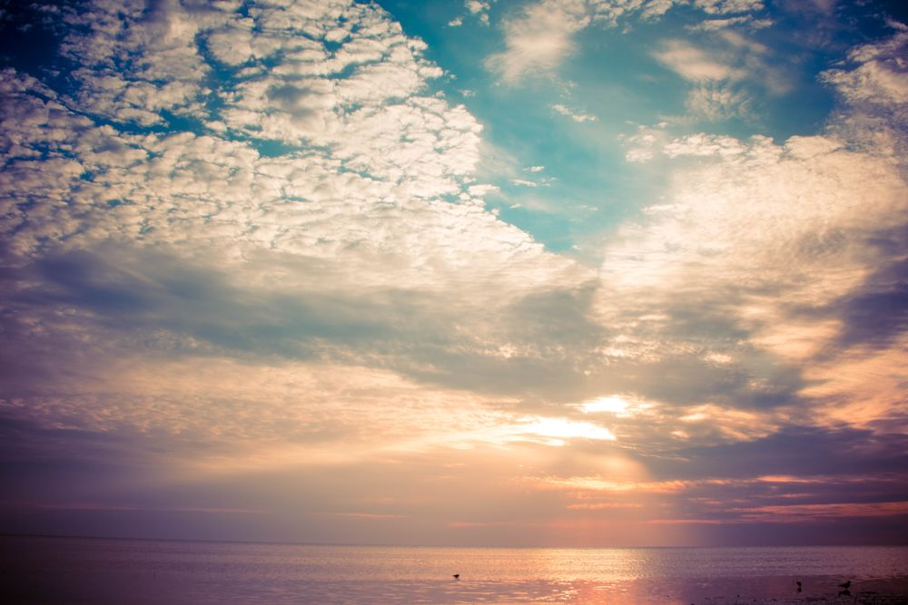 Photo in Landscape #sunset #beach #florida #seagull #water