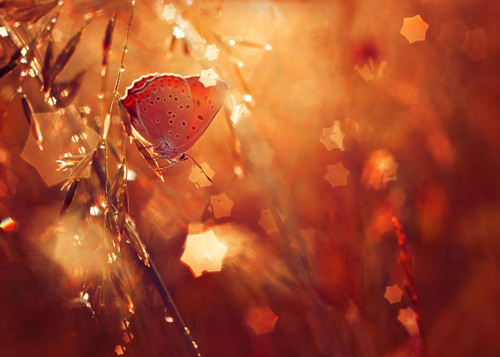 Photo in Macro #ypa2013 #butterfly #bokeh #stars #summer #sunset #m42 #orange #magic #nature #creatin #macro #meadow