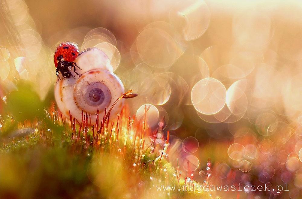 Photo in Macro #ypa2013 #macro #light #bokeh #ladybird #ladybug #wasiczek #magic #shell #nature