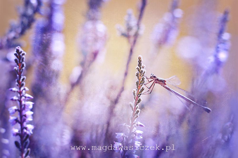 Photo in Macro #ypa2013 #dragonfly #macro #bokeh #texture #summer #fresh