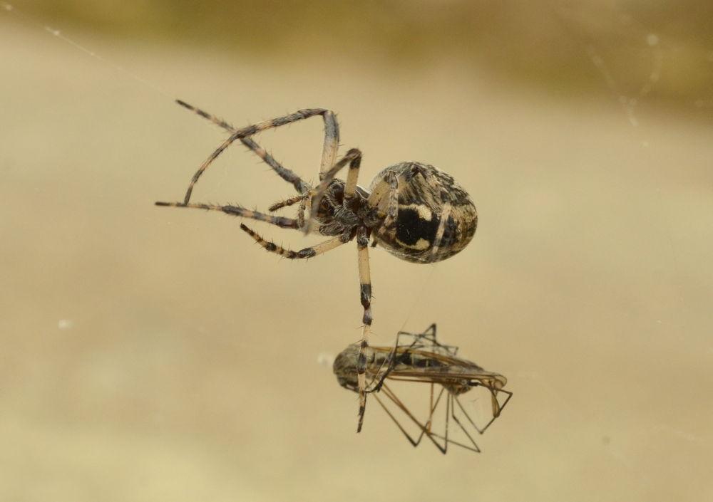 Photo in Macro #spider #macro #detail #nature #ypa2013