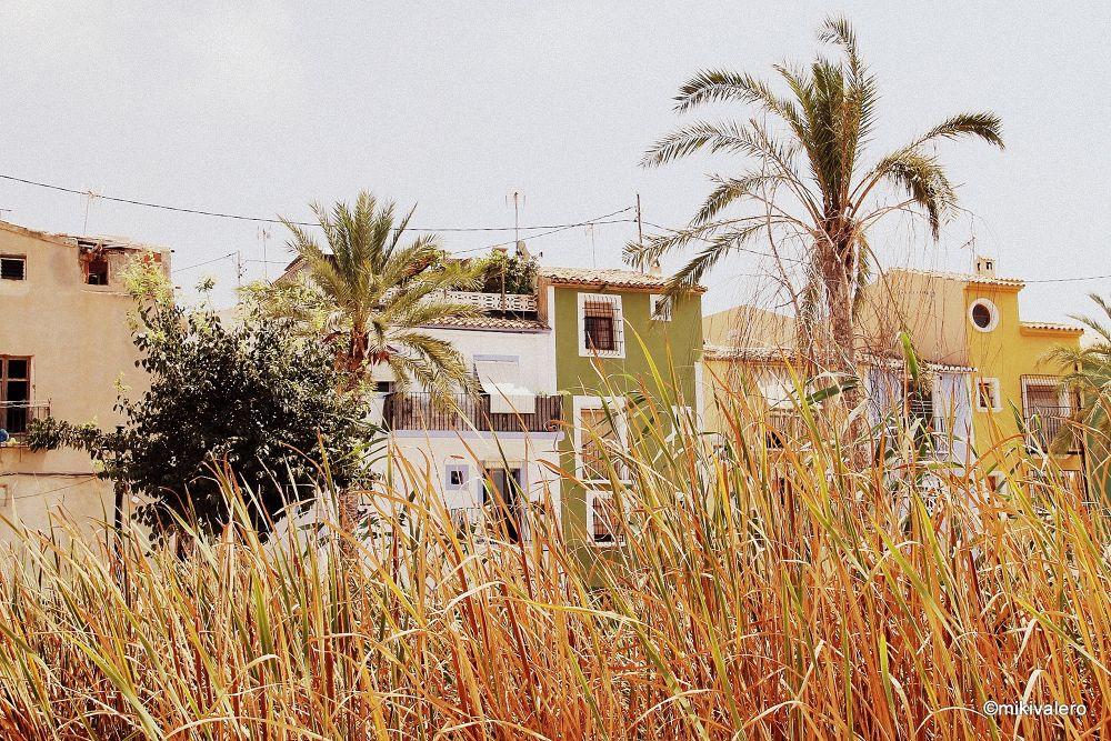Photo in Random #villajoyosa #palmeras #ypa2013