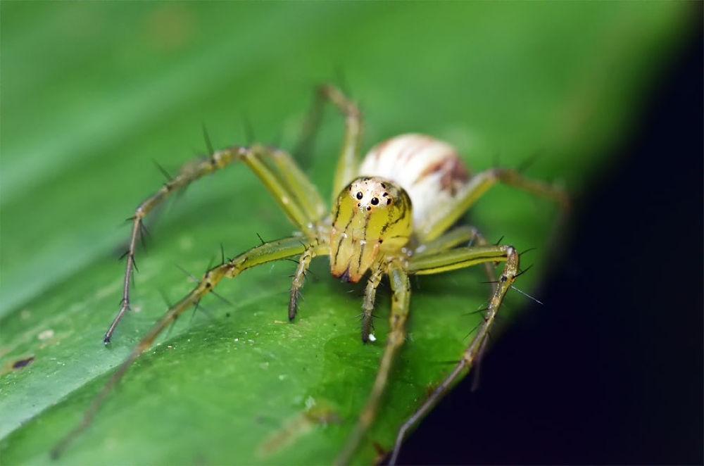 Photo in Random #macro #nature #animal #spider