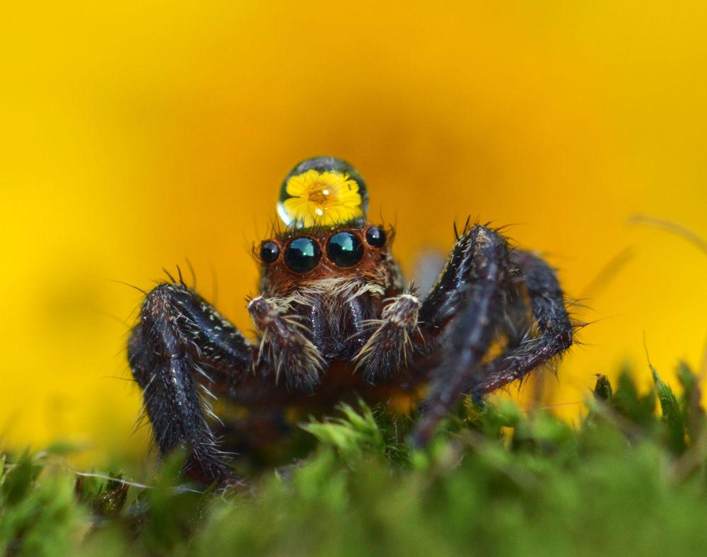 Photo in Random #macro #spider #nature #animal