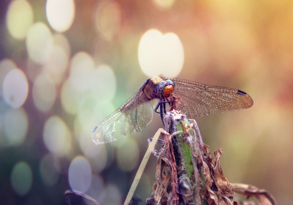 Photo in Random #macro #nature #animal #gantrung #dragon fly