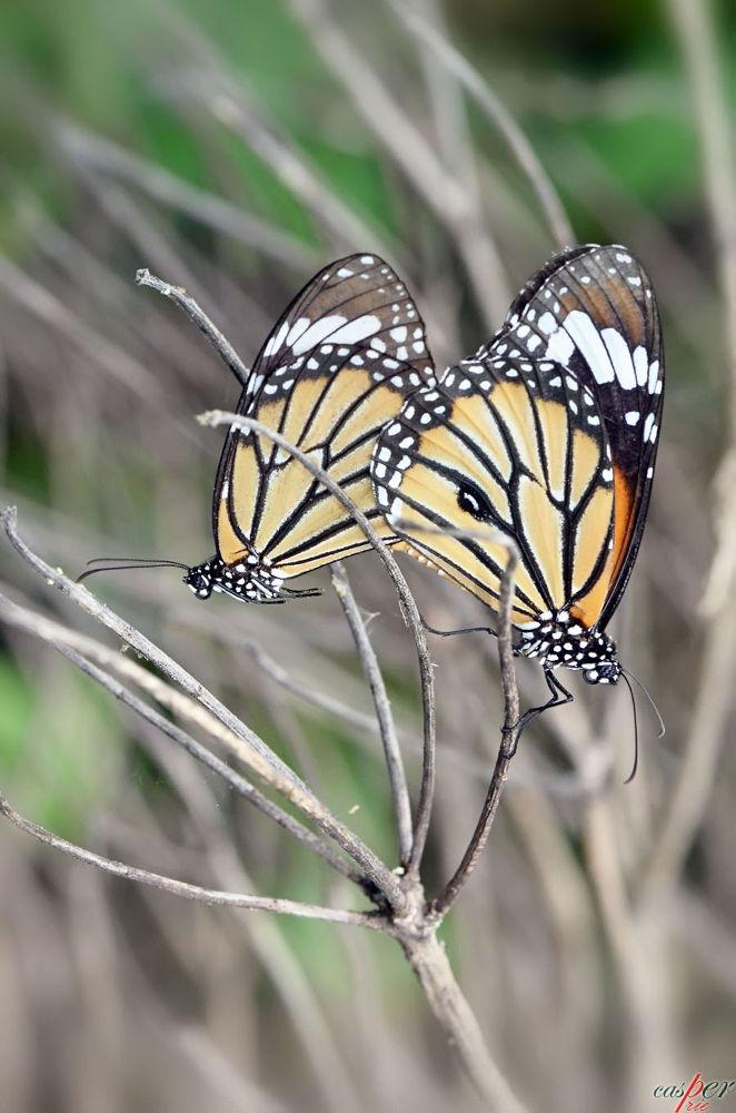 Photo in Random #macro #nature #animal #butterfly