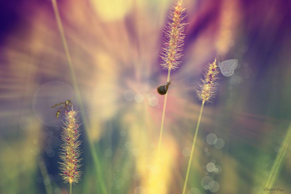 Photo in Macro #macro #nature #animal #snail #butterfly #bee