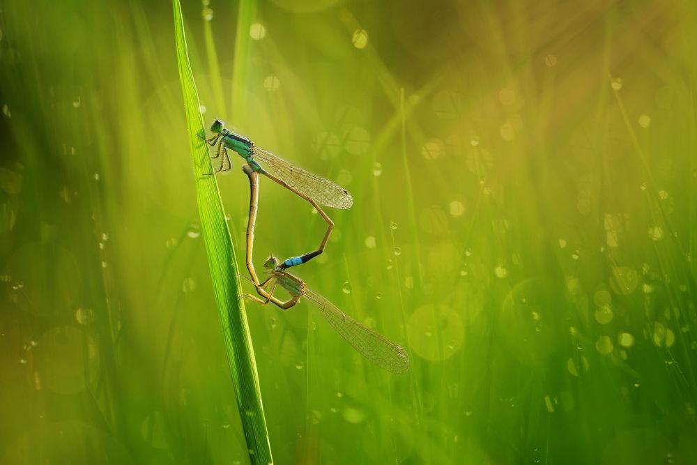 Photo in Macro #macro #dammselfly #matting #grassh #bokeh #rol #animal #insect