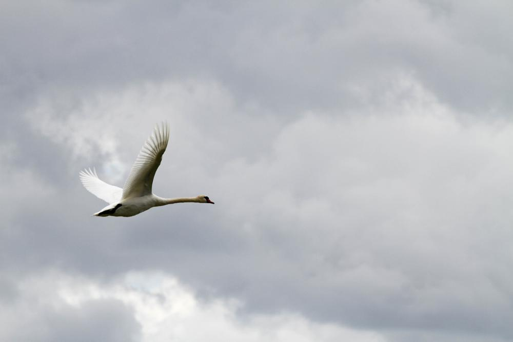 Photo in Nature #flying aeay #sweden