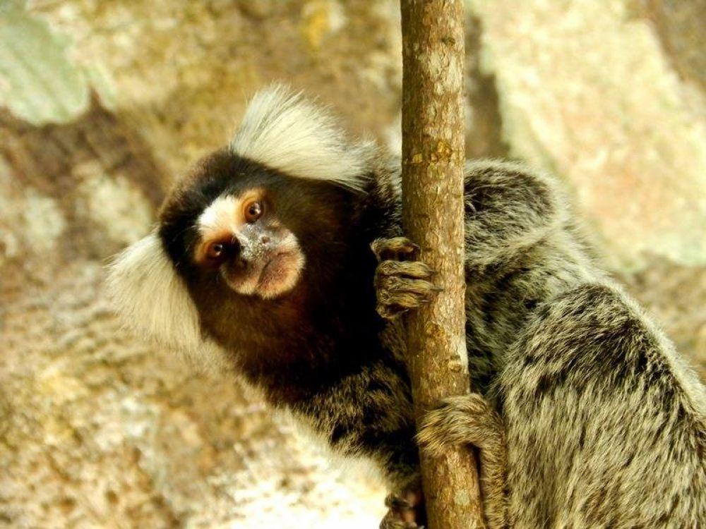Photo in Animal #brazil