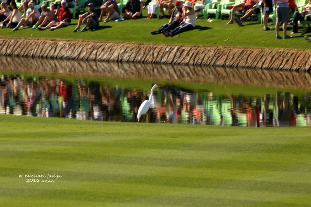 Photo in Sports #reflections #water #photography #sports #gplf #fun stuff