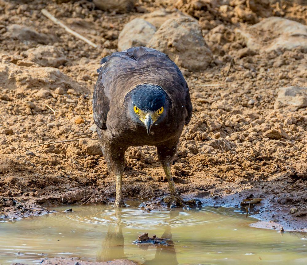 Photo in Animal #india #wildlife #safari #zoomphototours.com #birds