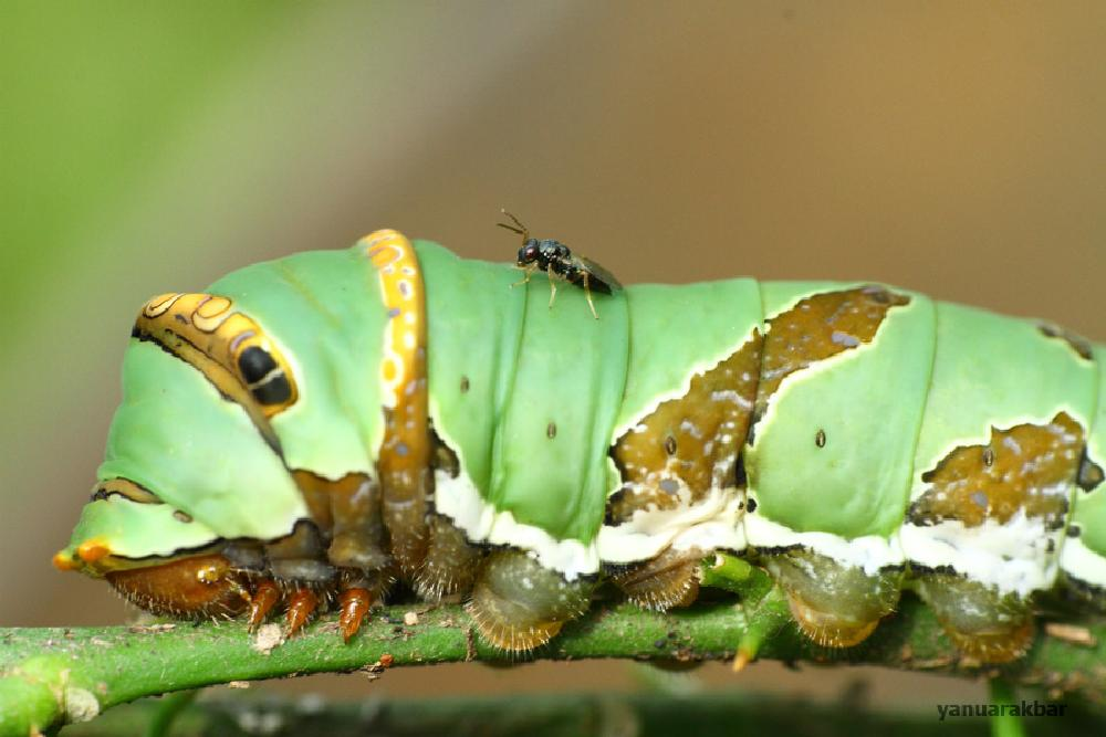 Photo in Macro #caterpillar #fly #insect #friendship