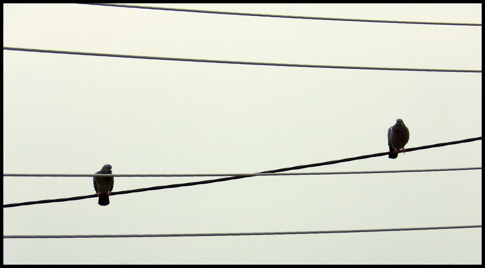 Photo in Abstract #lines birds