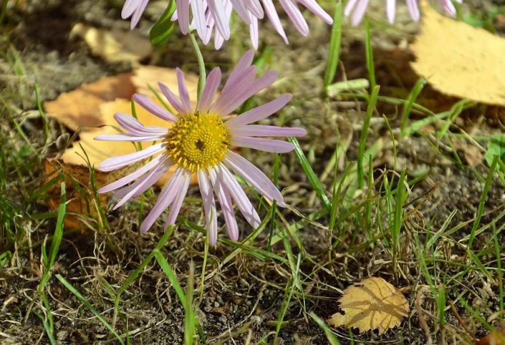 Photo in Nature #nature #autumn #fall #flower #grass #ура2013