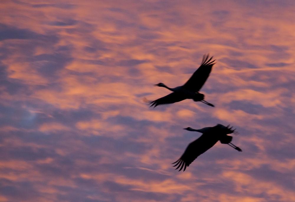 Photo in Animal #nature #wildlife #bird