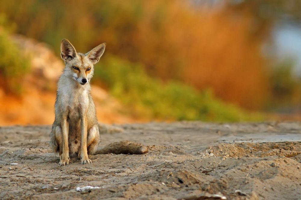Photo in Animal #nature #wildlife #fox #ypa2013