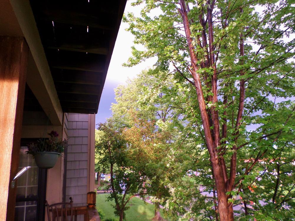 Photo in Nature #sun #storm #trees #weather #shawnee #kansas