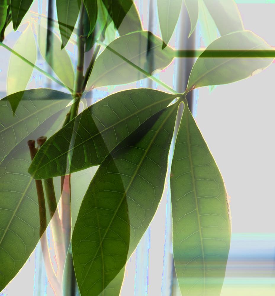 Photo in Still Life #still_life #winnipeg saint boniface #coffee shop plants #green leaf