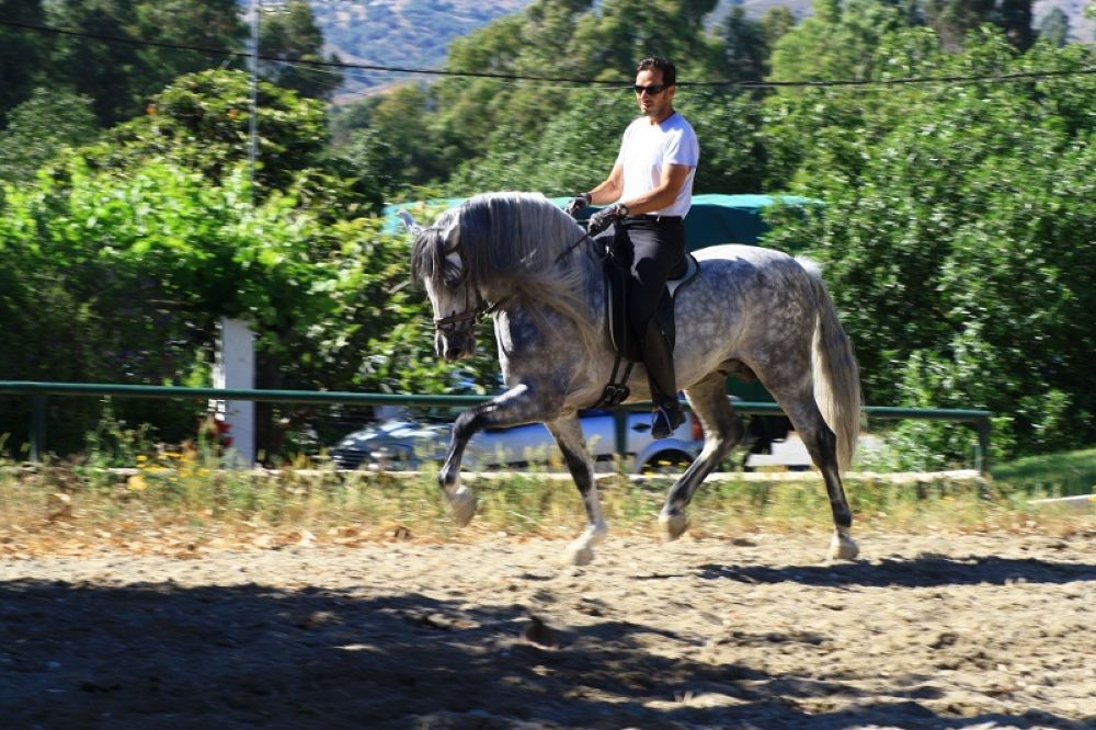 Photo in Random #horse power