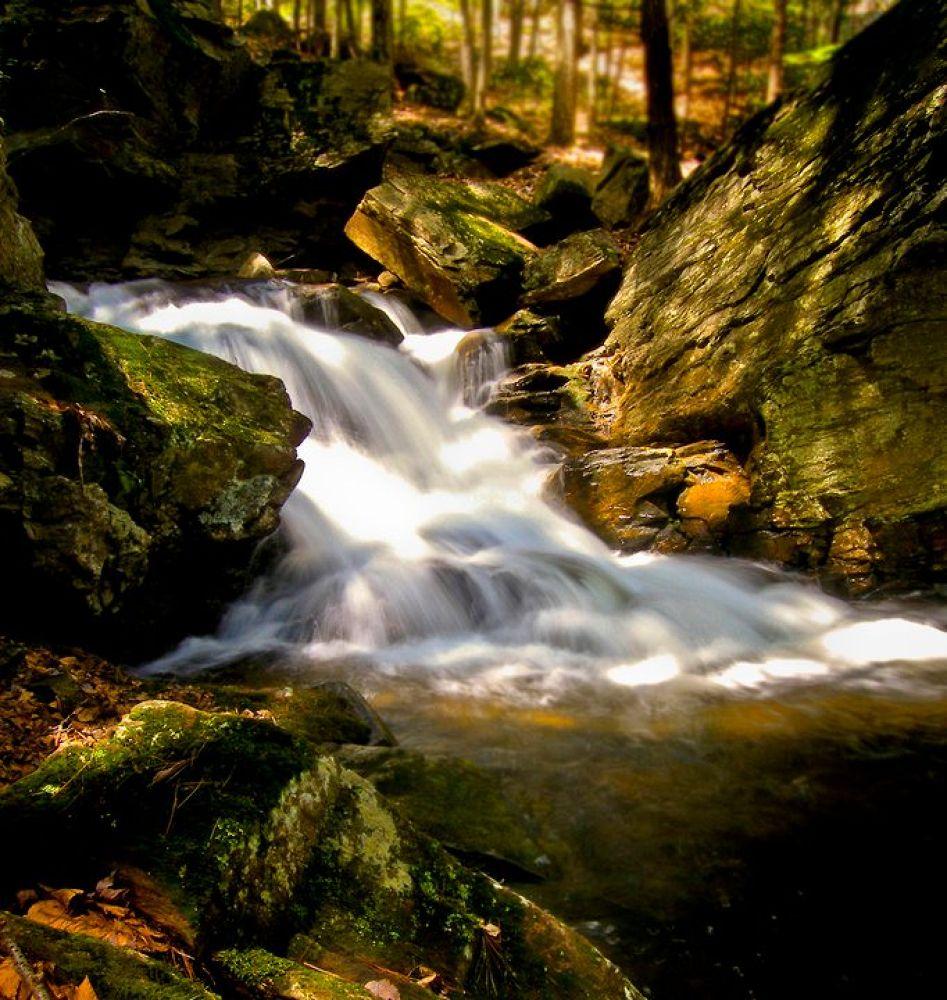 Photo in Nature #falls #nature #woods #stream