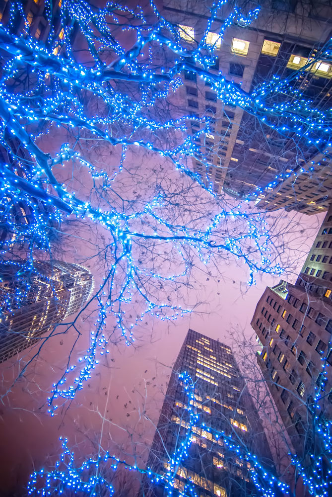 Photo in Cityscape #christmas in the city #lights #skyscrapers #city #charlotte #nc #north carolina