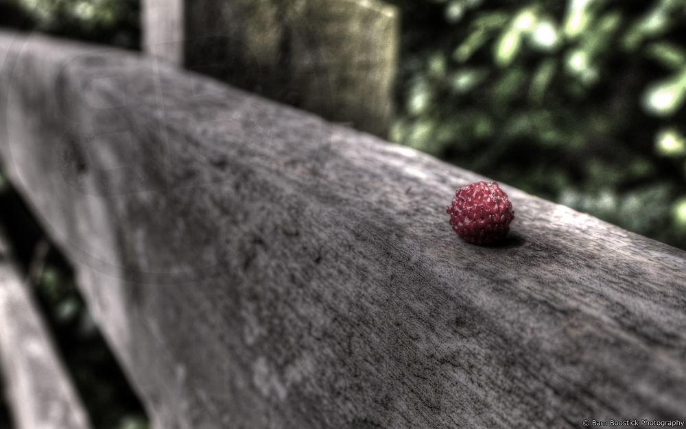 Photo in Macro #mountain #strawberry #macro #fruit #fence #wigg #island #runcorn #united #kingdom #england