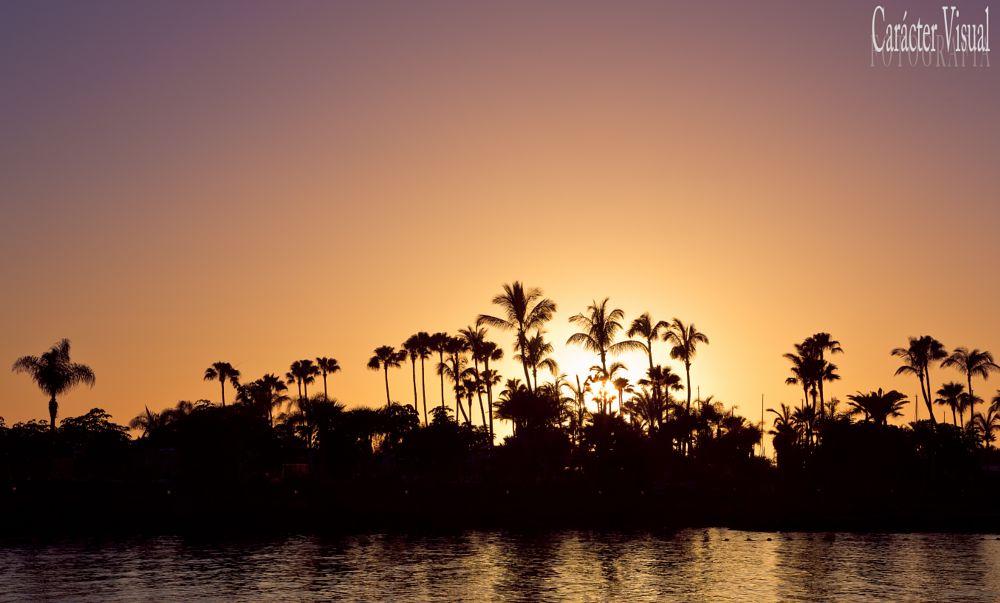 Photo in Landscape #paraíso #gran canaria #foto #imagen #paisaje #contraluz #palmeras #sol #turismo #vacaciones #españa #luz #buen tiempo #carácter visual #fotógrafo las palmas