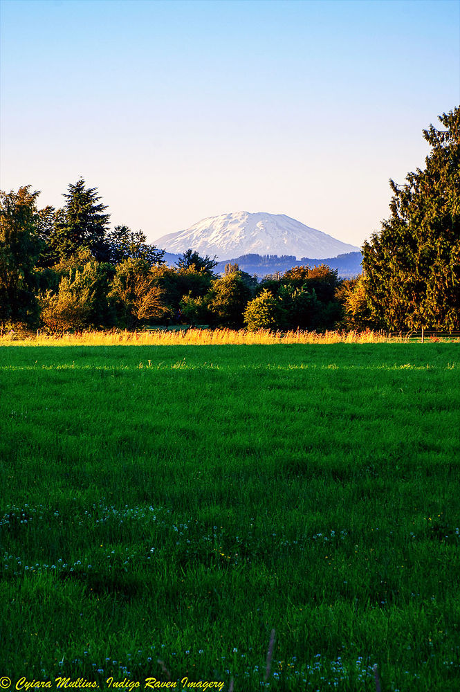 Photo in Landscape #nature #mount st. helens #landscape #washington