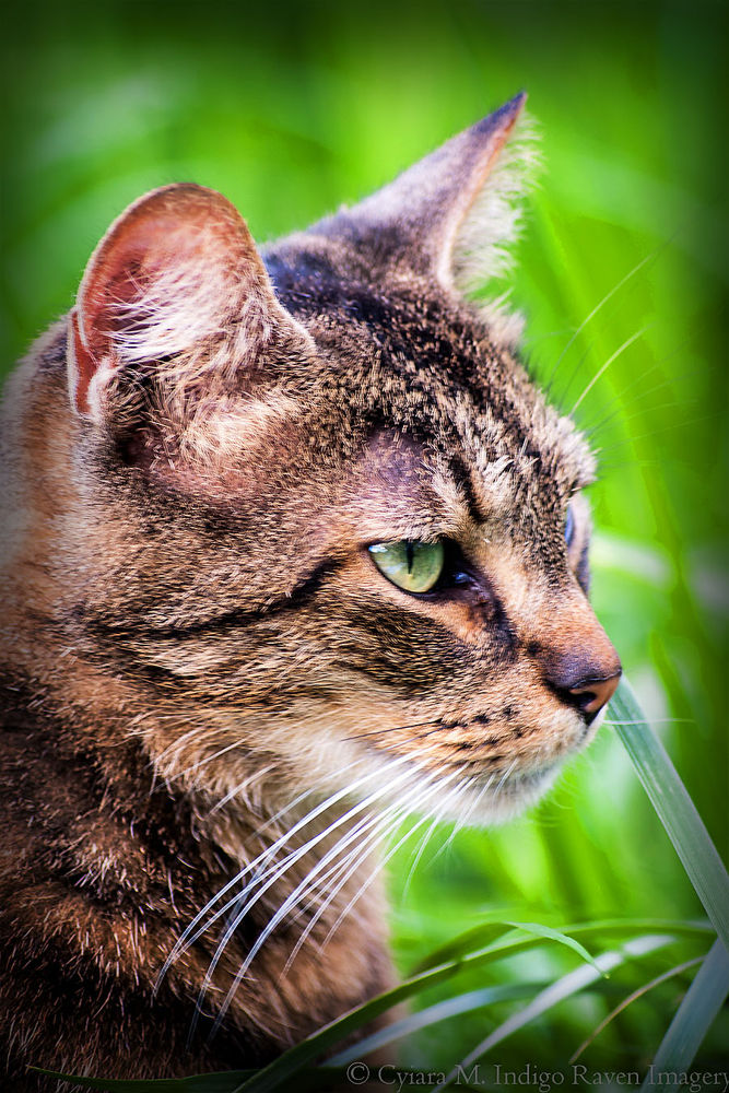 Photo in Animal #cats #color photos #animals