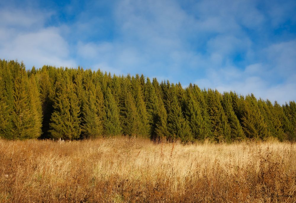Photo in Landscape #forest #spruce #fall #autumn #blue #green #sky #nature #landscape #grass #skyscape #layers