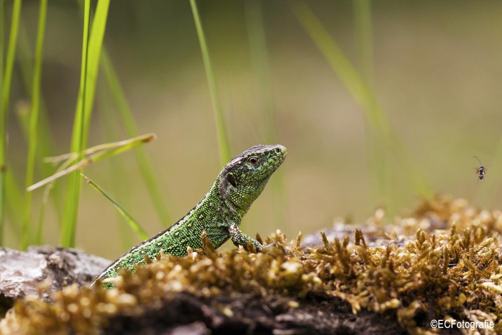 Photo in Animal #lizard #nature #macro #ggreen #grass #trea
