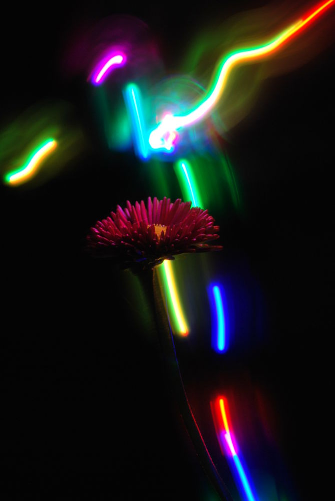 Photo in Abstract #light #flower #lichtkunst #abstract #blumenlicht #art #light flower #lichtblume