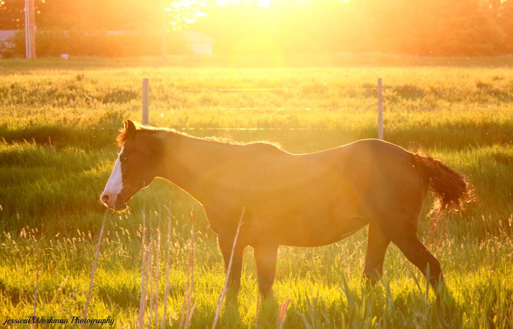 Photo in Random #mare #horse #equine #equestrian #prairie #pasture #blue #eye #blue eye #bay #farm #ranch #animal #animals #nature #domestic