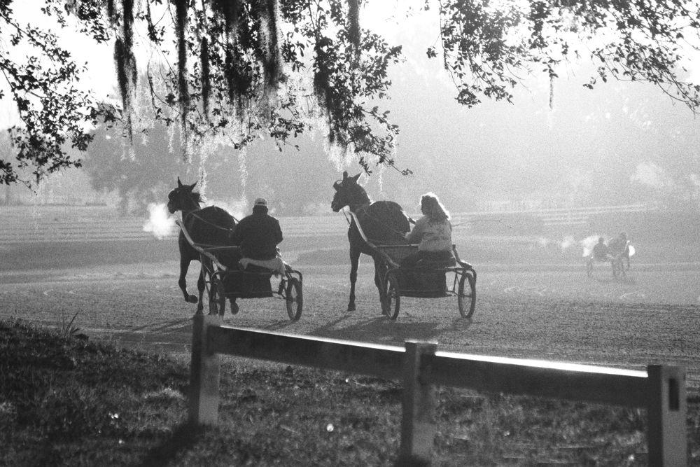 Photo in Animal #horse #standarbred #fog #harness racer