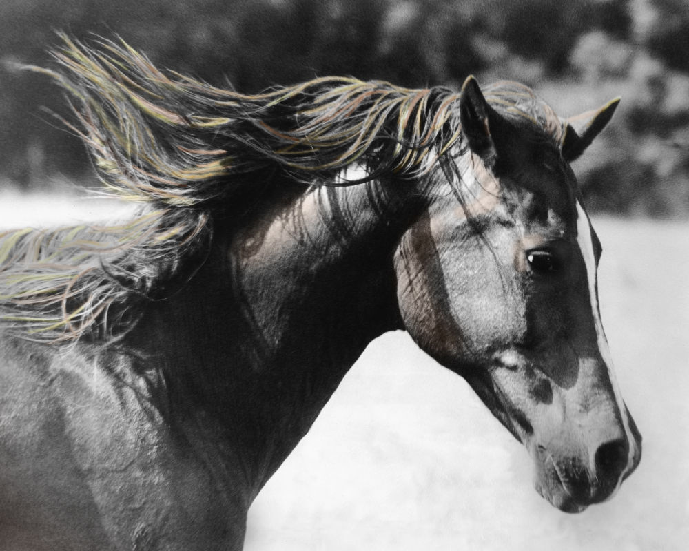Photo in Animal #horse #running horse #horse mane