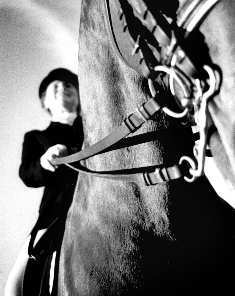 Photo in Animal #horse #black and white #curb bit #horse rider