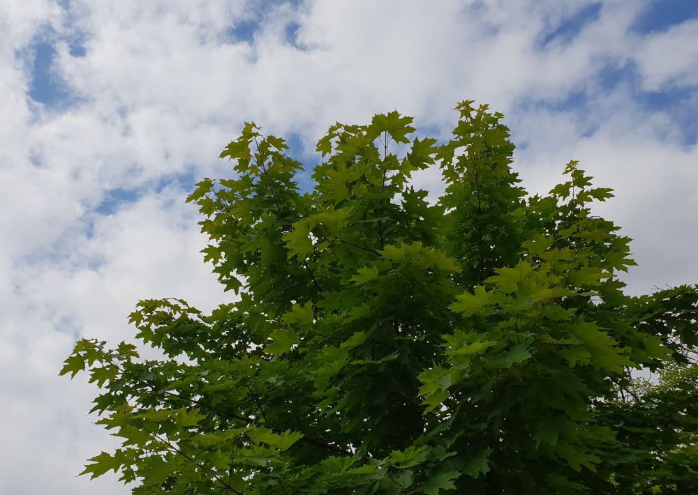 Photo in Nature #tree #nature #clouds