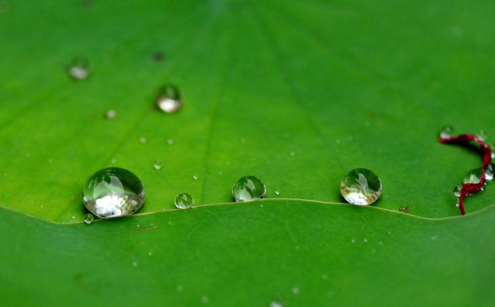 Photo in Nature #drops #macro