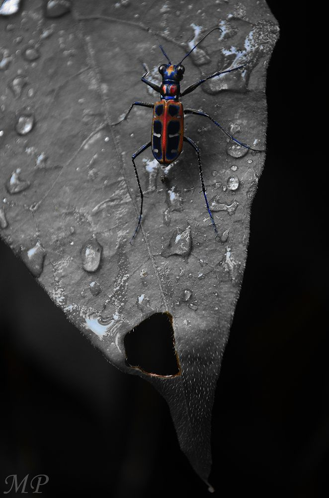 Photo in Random #insects #leaf #water drops