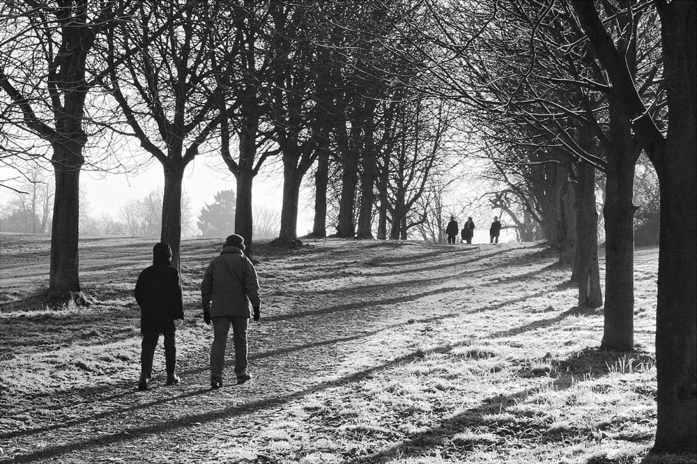 Photo in Landscape #parks #winter #frost #southweald