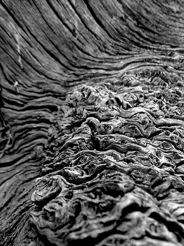 Photo in Random #black and white tree macro pho